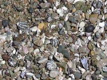 Strandskal och kiselstenar Royaltyfri Bild