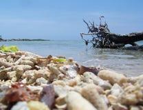 Strandskalen arkivfoto