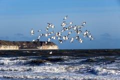 Strandskatafåglar vid havet Royaltyfri Fotografi