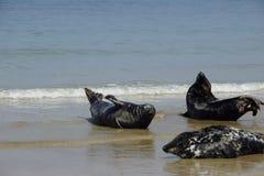 strandskyddsremsor royaltyfri foto