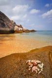 strandsnäckskal arkivbild