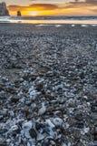 Strandsolnedgång med skal Royaltyfri Fotografi