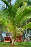 Strandstühle beetween tropica Palmen lizenzfreie stockfotografie