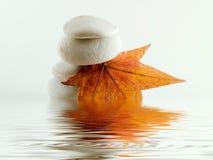 Strandsteine mit Blatt- und Wasserreflexion Stockfoto