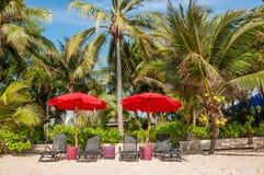 Strandstuhl unter Regenschirm mit Kokosnussbäumen als Hintergrund stockbild