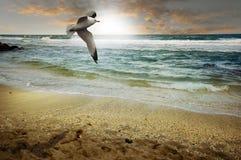 Strandszene lizenzfreies stockbild