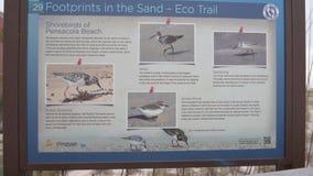 Strandteken met Dier en Vogels dichtbij het Pensacola-Strand, Florida stock videobeelden