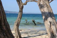 Strandträd Arkivfoton