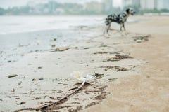 Strandverschmutzung Plastikflaschen und anderer Abfall auf Meer setzen auf den Strand Stockfotos