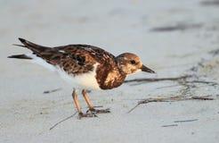 Strandvogel Lizenzfreies Stockbild