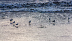 Strandvogels Royalty-vrije Stock Foto's
