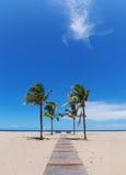 Strandweg met palmen Stock Afbeeldingen