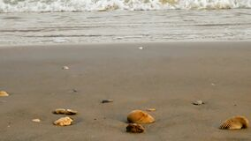 Strandzand met oceaangolven die zacht naar overzeese shells op kust rollen stock video