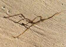 Strandzeichenseegras auf einem sandigen Strand stockfotos