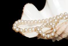 Strang der cremefarbenen Perlen in einem Shell Stockbild