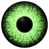 Strange Animal Green Eye With Purple Colored Iris, Detail View Into Eye Bulb