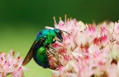 Strange bee Stock Photo