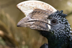 Strange bird Stock Photography