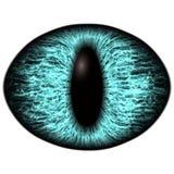 Strange blue eye of feline animal with colored iris. Detail view into isolated predator eye bulb. Strange blue eye of the feline animal with colored iris. Detail Royalty Free Stock Photos
