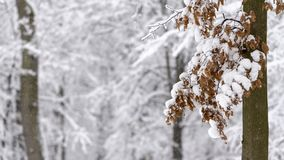 Strange branches covered with snow background winter concept. Strange branches covered with snow winter concept stock image
