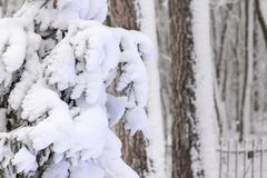 Strange branches covered with snow background winter concept. Strange branches covered with snow winter concept stock photo