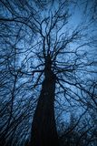 Strange branching tree silhouette. Strange branching tree silhouette against the night sky stock photography
