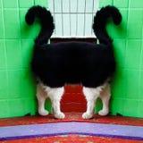 Strange cat Stock Photography