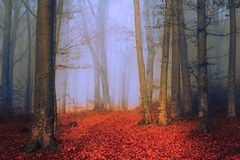Strange colored fog during an autumn day in the forest Stock Photography