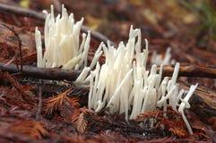 Strange fairy fingers mushrooms Stock Photos