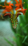 A strange flower growing in ireland Royalty Free Stock Image