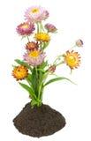 Strange flowers Stock Images