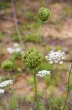 Strange flowers Royalty Free Stock Image