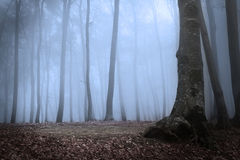 Strange forest in blue fog Stock Photo