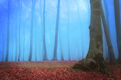 Strange forest in blue fog Royalty Free Stock Images
