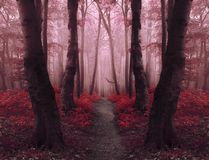 Dreamy red foggy forest with fairy tale trail royalty free stock image