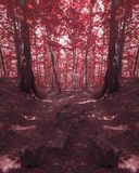 Red forest with strange stone road Stock Photography