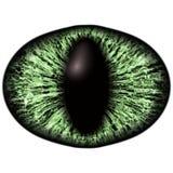 Strange green eye of feline animal with colored iris. Detail view into isolated predator eye bulb. Strange green eye of the feline animal with colored iris Royalty Free Stock Photos