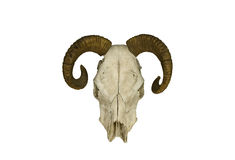 Strange horned skull isolated. On white Royalty Free Stock Photo