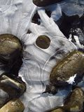 Strange ice shapes. Close photo of interesting ice structure and some pebbles stock photography