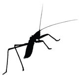 Strange insect vector silhouette Royalty Free Stock Photo