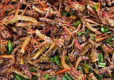 Strange insects fried food taste good food. Strange insects fried food taste good food from Thailand stock photography