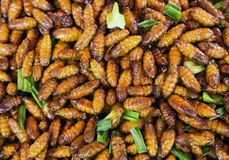 Strange insects fried food taste good food. Strange insects fried food taste good food from Thailand royalty free stock image