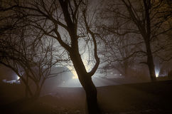 Strange light in a dark forest at night, spooky foggy landscape of trees silhouettes with light behind, mystical concept Royalty Free Stock Image