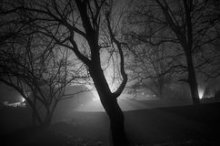 Strange light in a dark forest at night, spooky foggy landscape of trees silhouettes with light behind, mystical concept Stock Photography