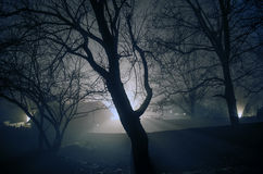 Strange light in a dark forest at night, spooky foggy landscape of trees silhouettes with light behind, mytical concept Royalty Free Stock Photo