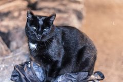 A strange looking cat sitting on my bag and looking my camera royalty free stock photography