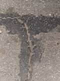 Strange metamorphoses. Filled cracks in the asphalt bitumen Royalty Free Stock Images