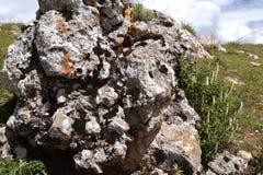Strange moss plant pattern Royalty Free Stock Photo