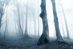 Strange phantomatic light in  dark forest with fog Royalty Free Stock Images