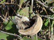 Strange plant fruit Royalty Free Stock Photo
